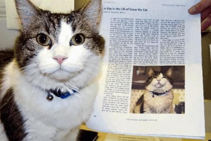 (ВИДЕО) Мачорот Оскар има бизарна моќ – може да ја намириса смртта