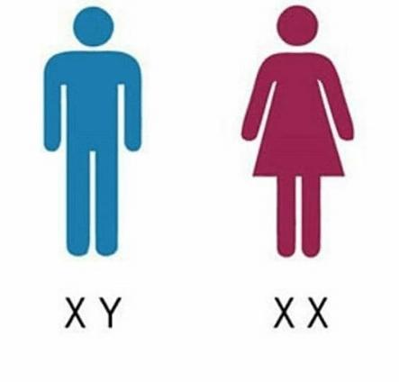 Ова е методот за зголемување на шансите за машко или женско дете