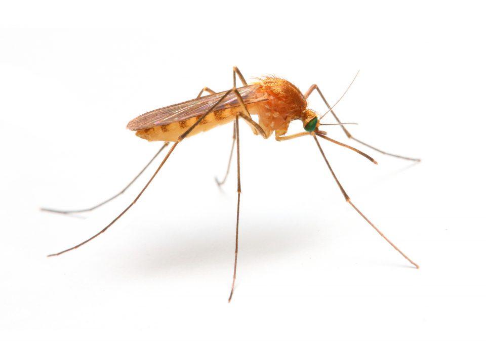 Убод од комарец – како да го ублажите иритирачкото чешање?