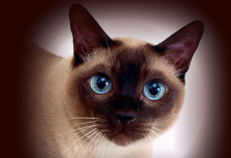(Видео) Стаписана: Реакцијата на мачката по доаѓањето на бебе во домот ќе ве насмее до солзи