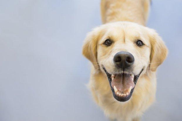 (Видео) Преслатко: Куче се смее кога го фотографираат