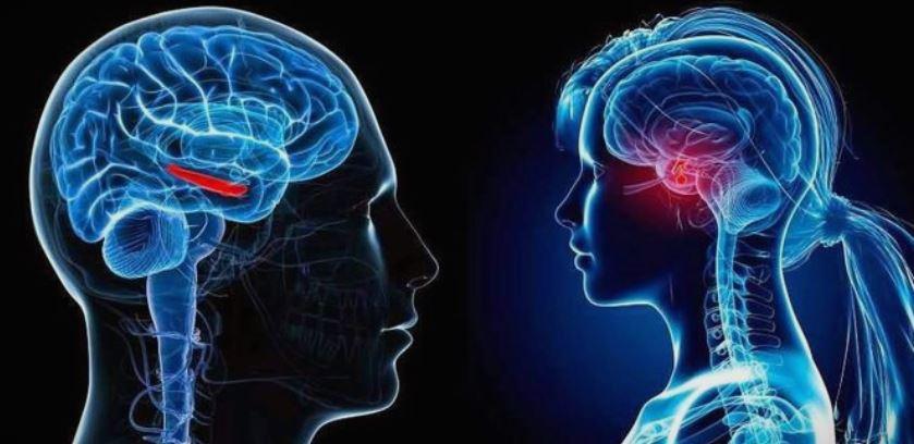 Што се случува во нашиот мозок во текот на сексот?