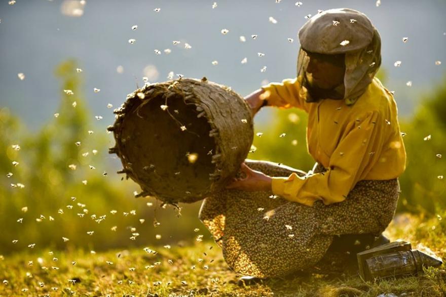 """Македонското филмско остварување """"Медена земја"""" прогласен за најдобар светски документарец на """"Санденс"""""""