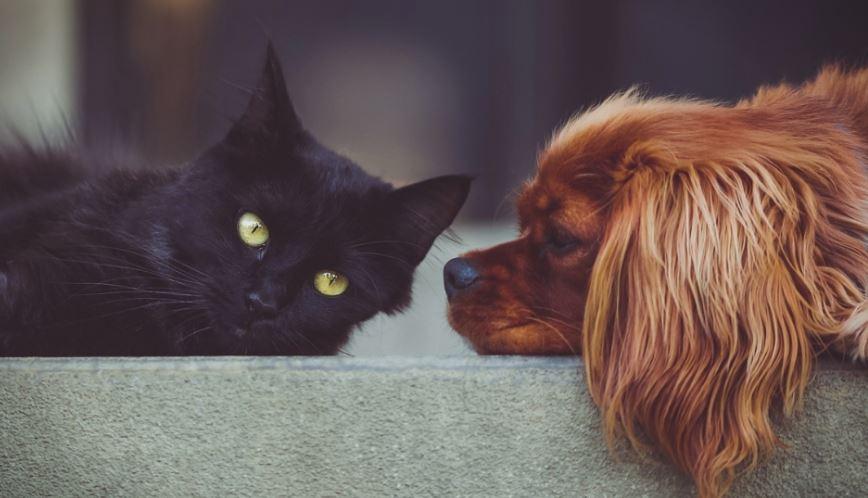Истражување кое ја реши дилемата: Дали да чувате куче или мачка?
