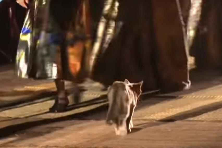 Мачка ноншалантно прошетала по модната писта на брендот Диор во Мароко