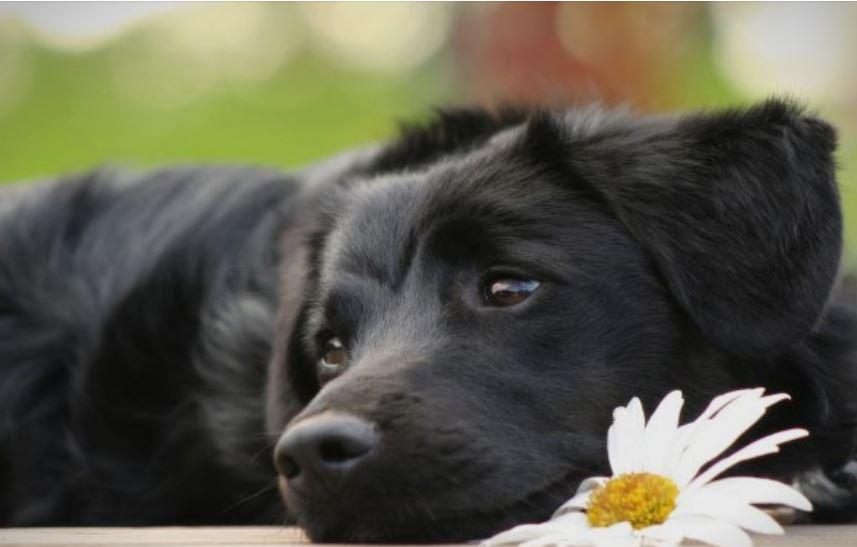 Анкета: Над 80 отсто од луѓето би раскинале ако партнерот не им го сака кучето
