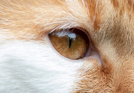 Мачката со две лица е хит на Инстаграм (фото)