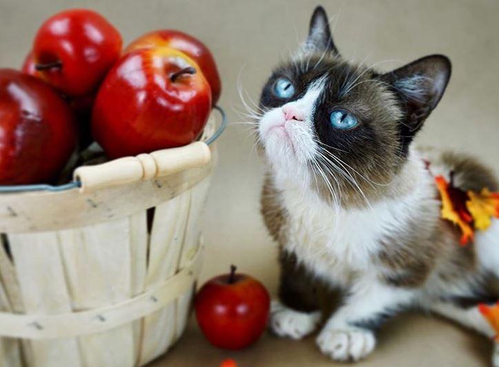 Ова се петте најпопуларни мачки на интернет