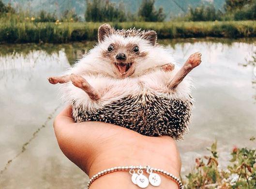 Запознајте го Мистер Поуки, најпопуларното еже на Инстаграм со 1,5 милиони следбеници!