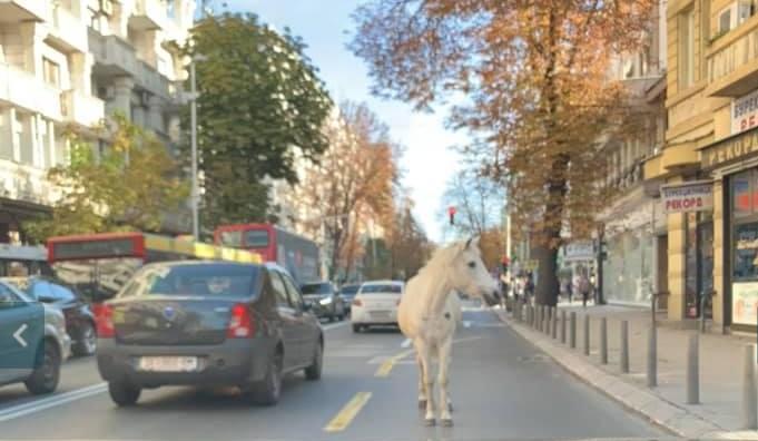 Градска фарма: Центарот на Скопје има коњ без принц, а еве што имаат Прилеп, Битола, Кичево, Кочани… среде центар (ФОТО)