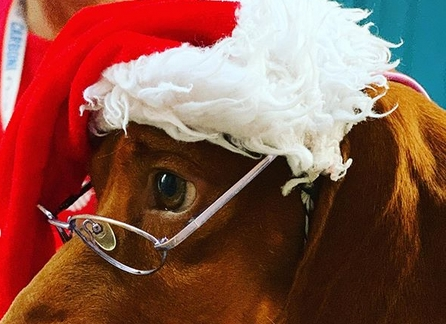 Скенирајте фискални, лечете деца со пораки, а кај Заеви, ни кучињата не живеат живот кучешки: Кучето на Ева Заева за роденден си доби Моет (ФОТО)