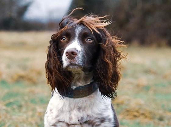"""Ова куче е главна ѕвезда на """"Инстаграм"""" поради својата фризура (фото)"""