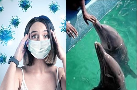 """Живот во време на корона: """"Јас веќе нема да мијам раце, ми дојде сметка за вода, како делфини да одгледувам"""" (ФОТО)"""