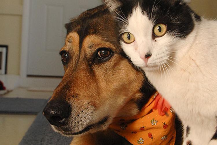 Кој е посреќен, оние што чуваат куче или оние што чуваат маче?