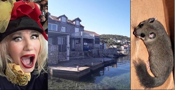 На познатата српска фолкерка глодари и го уништиле целиот мебел и ентериерот во викендичката на море (ФОТО)