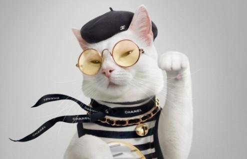 Запознајте ја Запа: Најфотогеничната и најстилска мачка на Инстаграм