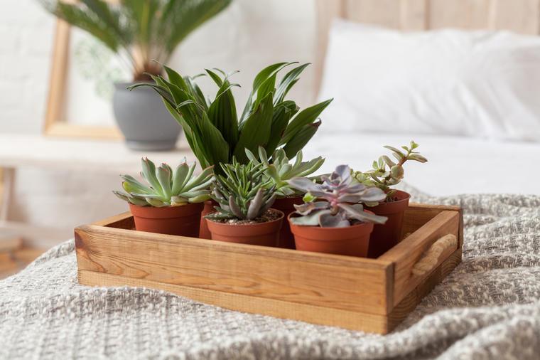 Овие билки штитат од негативна енергија и злобни намери