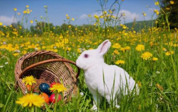 Симбол на пролетта и новиот живот: Каква поврзаност има зајакот со празникот Велигден?