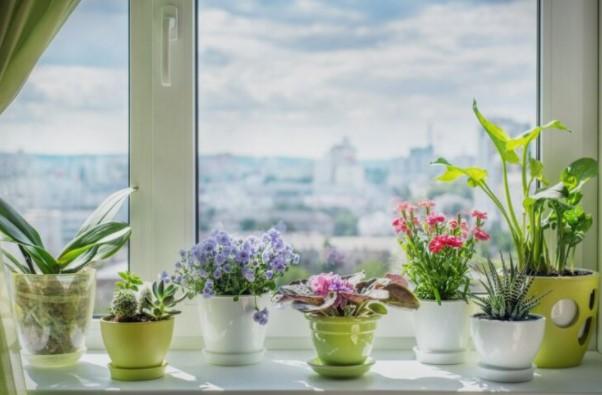 Совети за грижа за 5 собни растенија кои ќе го разубават вашиот дом
