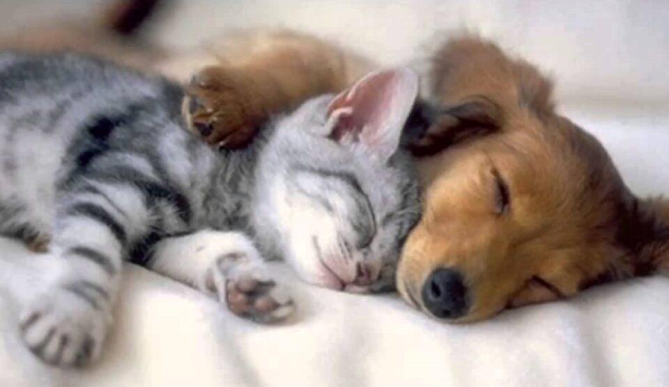 Коронавирусот и животните: Научниците имаат сè поголеми докази дека луѓето можат да ги заразат домашните миленици