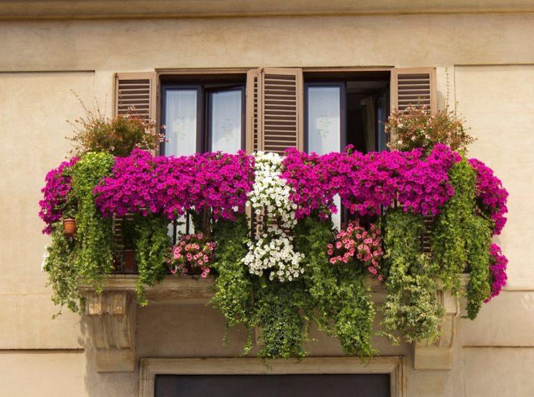 Како вашите растенија на балконот да го преживеат летото?