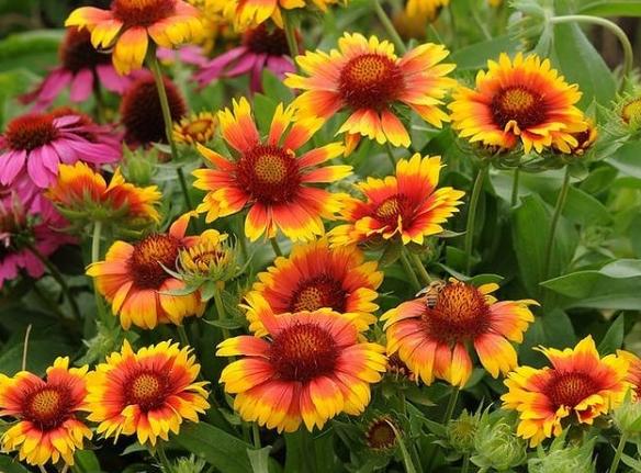 За градина полна со бои и мириси: Цвеќиња што цветаат во текот на целото лето